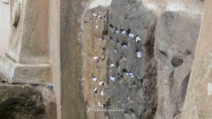 Ancien cimetière juif prague