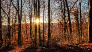 Shooting photo automne