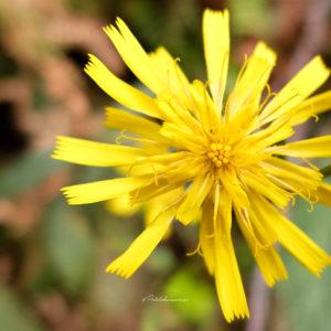 photographie fleur