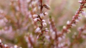 fleur macro photographie