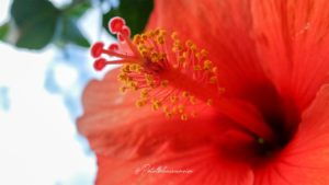 fleur jardin balata