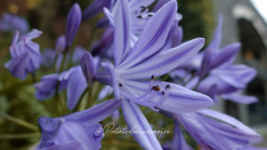 fleur-jardin-botanique-funchal