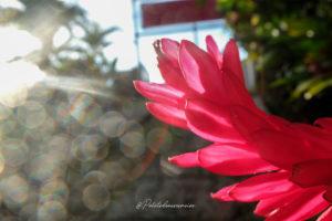 fleurs brasserie de la lézarde