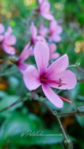 flore-caldeiro-verde