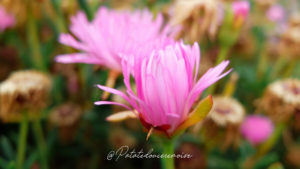 jardin-botanique-funchal