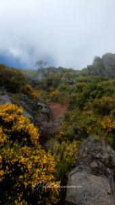 plus-belles-randonnées-madère