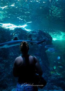 plus grand aquarium france Océanopolis