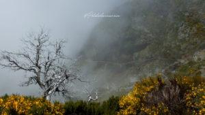 randonnée-montagne-madère