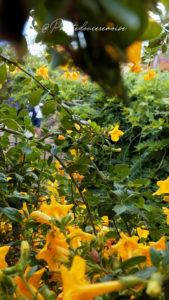 visiter-jardin-botanique-funchal